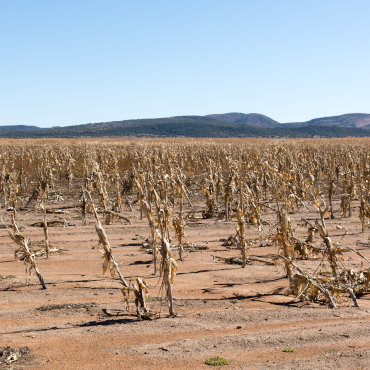 EDO – European Drought Observatory